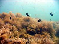 красивая подводная фотография