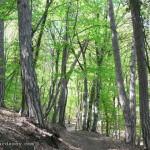 Лес у монастыря
